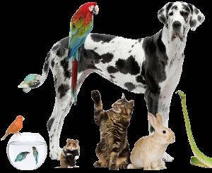 Pets drop shipping store